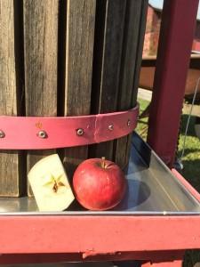 apple-989844_640